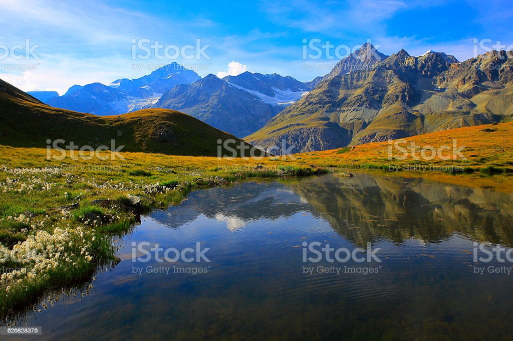 Swiss landscape: Alpine Lake reflection, cotton wildflowers meadows above Zermatt stock photo