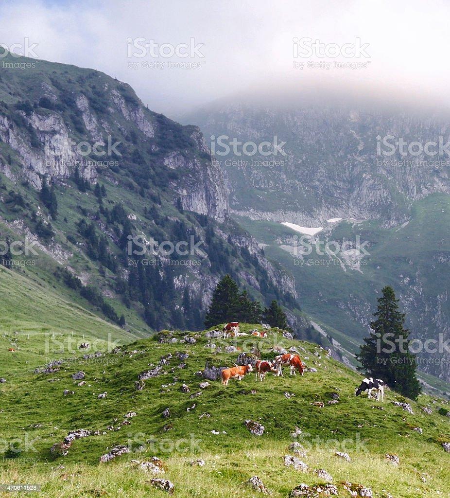 Swiss nature royalty-free stock photo