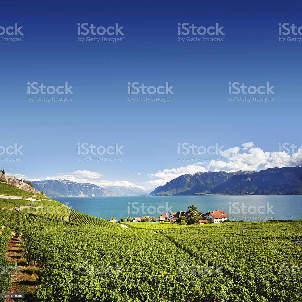 Swiss Vineyards stock photo