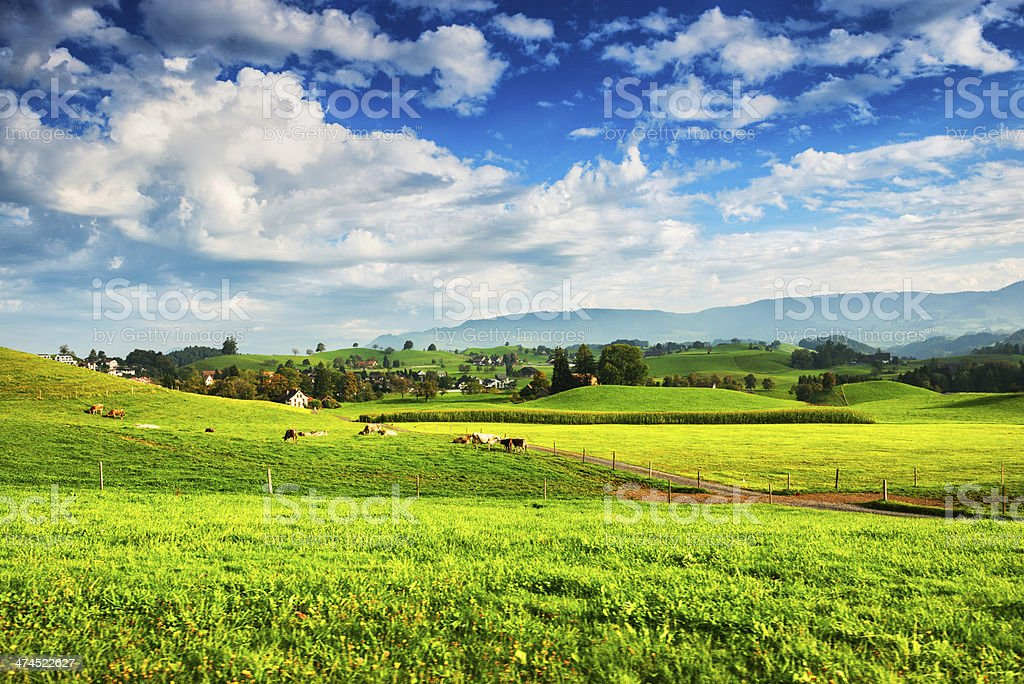 Switzerland Farming, Cows and Farms on Green Fields, European Alps stock photo