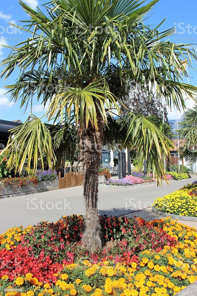 switzerland - Spiez, flowers and town stock photo