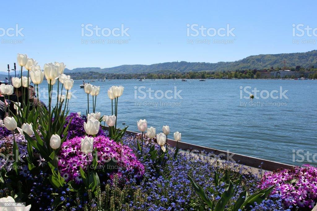 switzerland - zurich, lac de zurich stock photo
