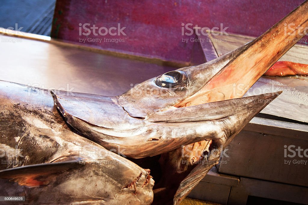 Swordfish face closeup detail stock photo