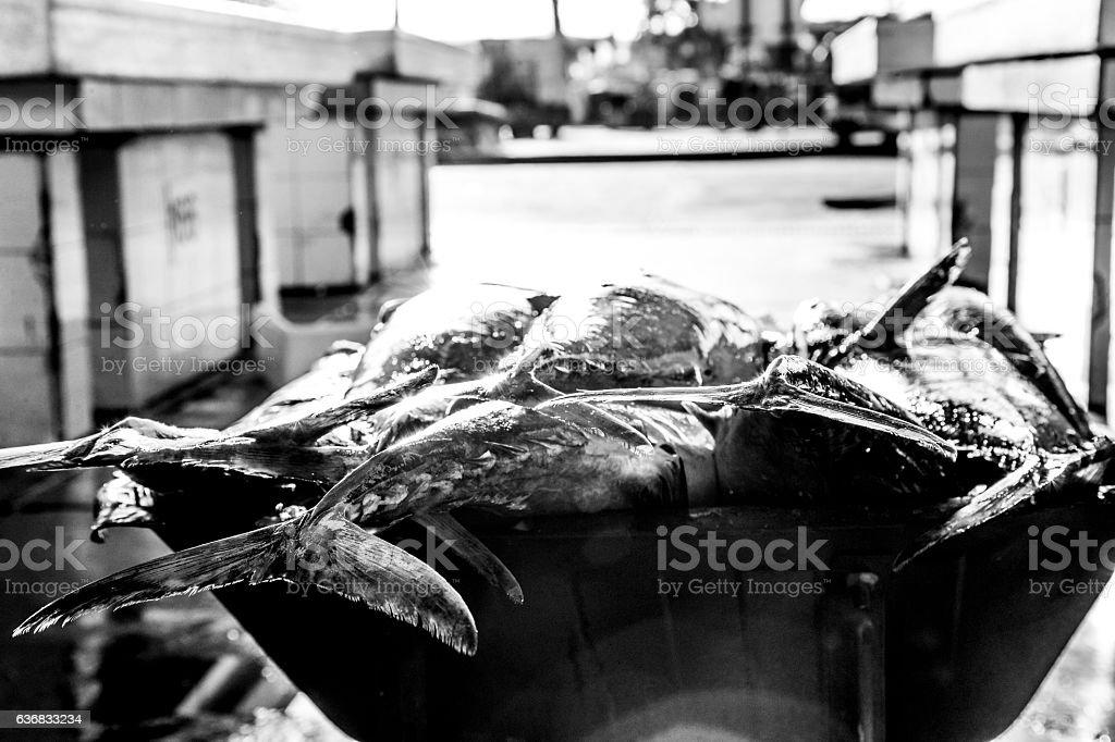 Swordfish left on a wheelbarrow, waiting to be sold. stock photo
