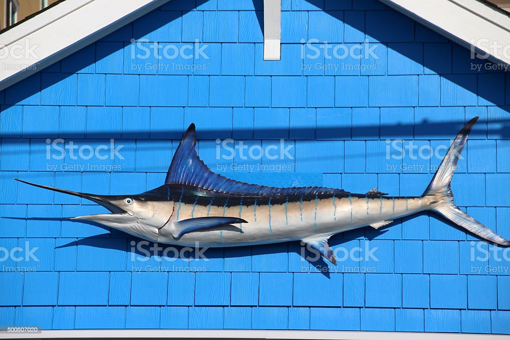 Swordfish stock photo