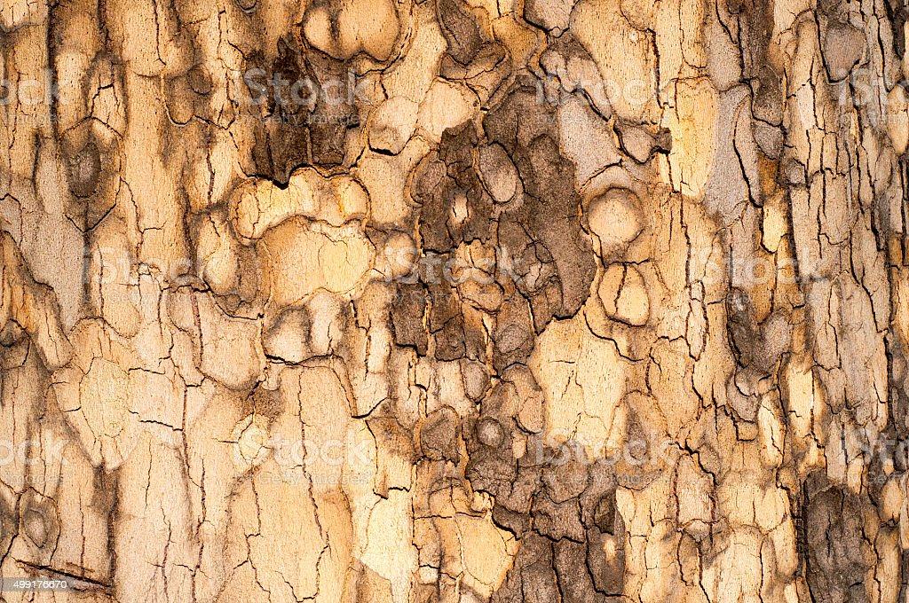 Sycamore Bark Texture stock photo