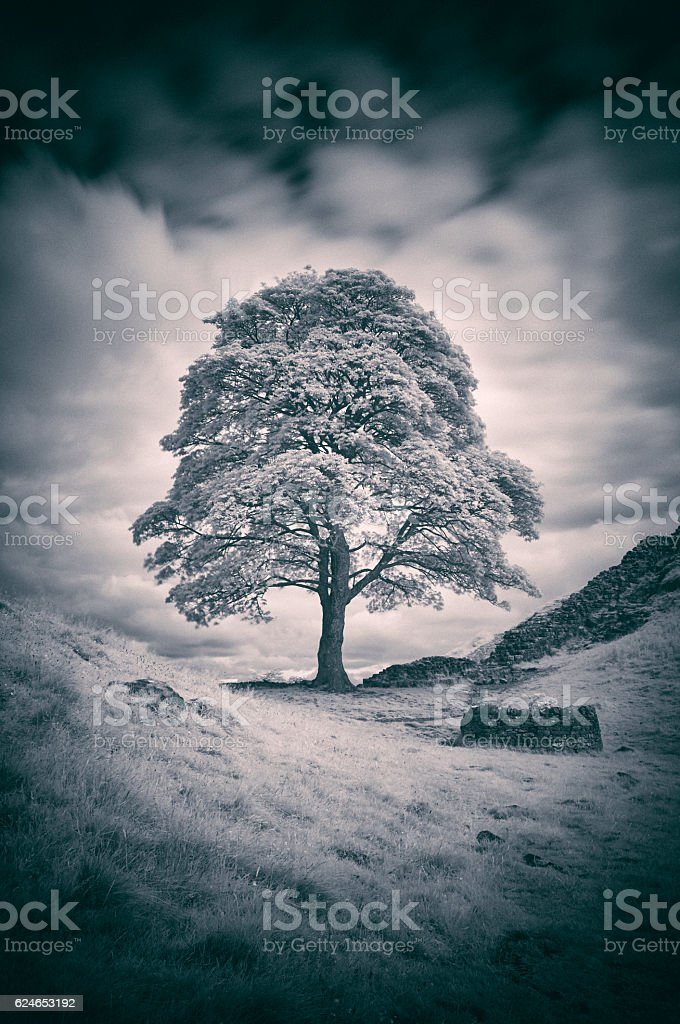 Sycamore Gap And Hadrian's Wall In Black And White stock photo