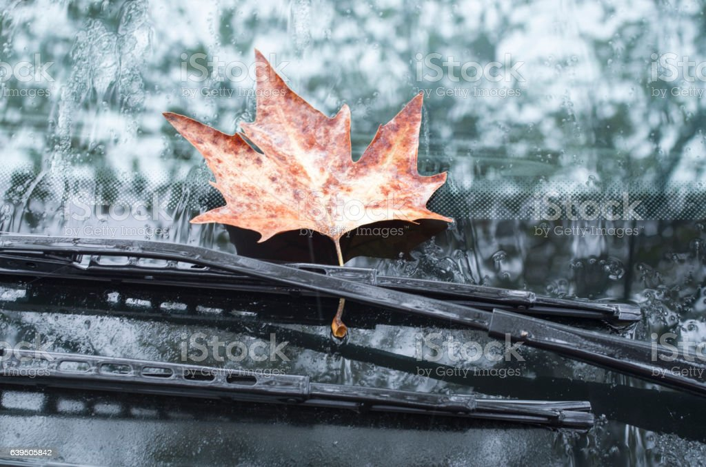 Sycamore leaf on wipers of a car in autumn day stock photo