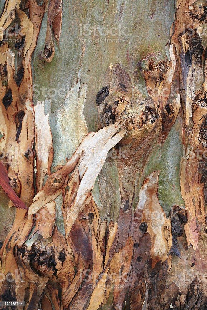Sycamore Tree Bark stock photo