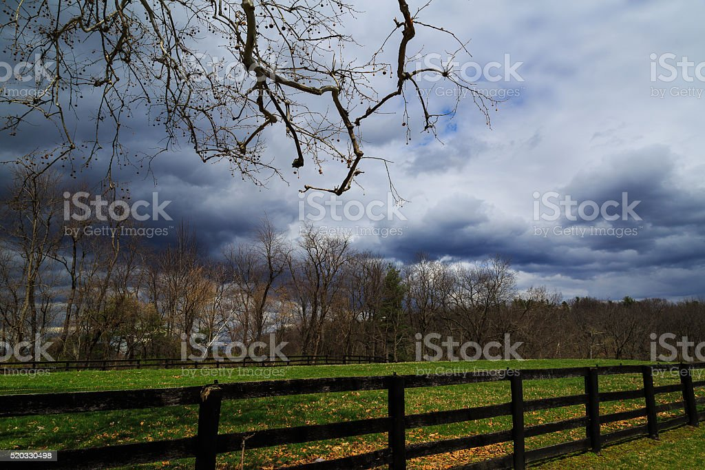 Sycamore tree overlooking Catskill Mountains cloudy day stock photo