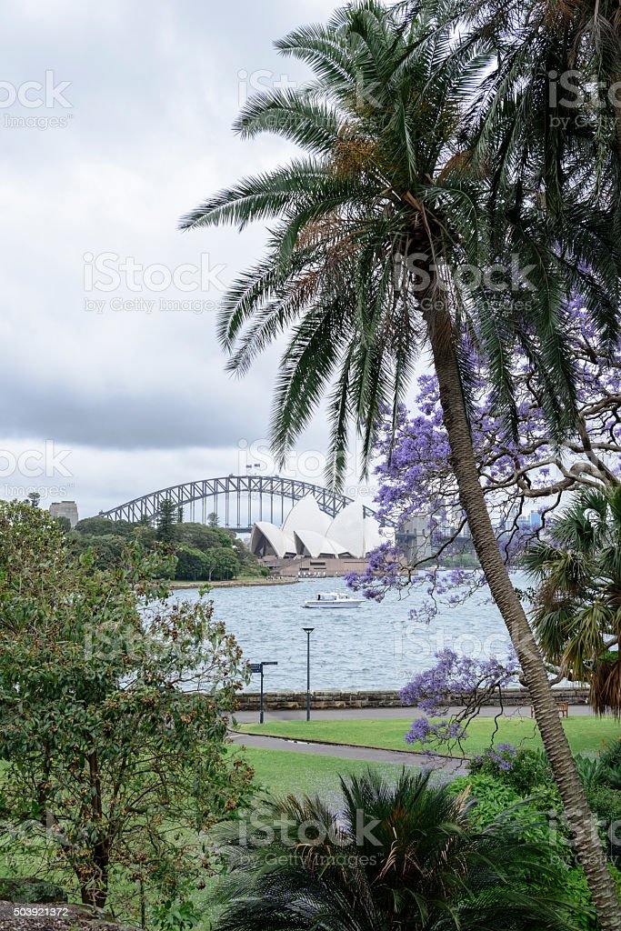 Sydney Harbour from Royal Botanic Gardens stock photo