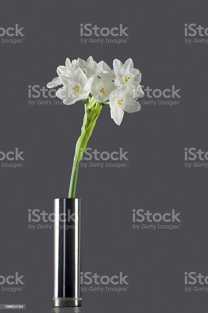 Symbol of spring. Sweet scented Narcissus Papyaceus ( Paperwhite). stock photo
