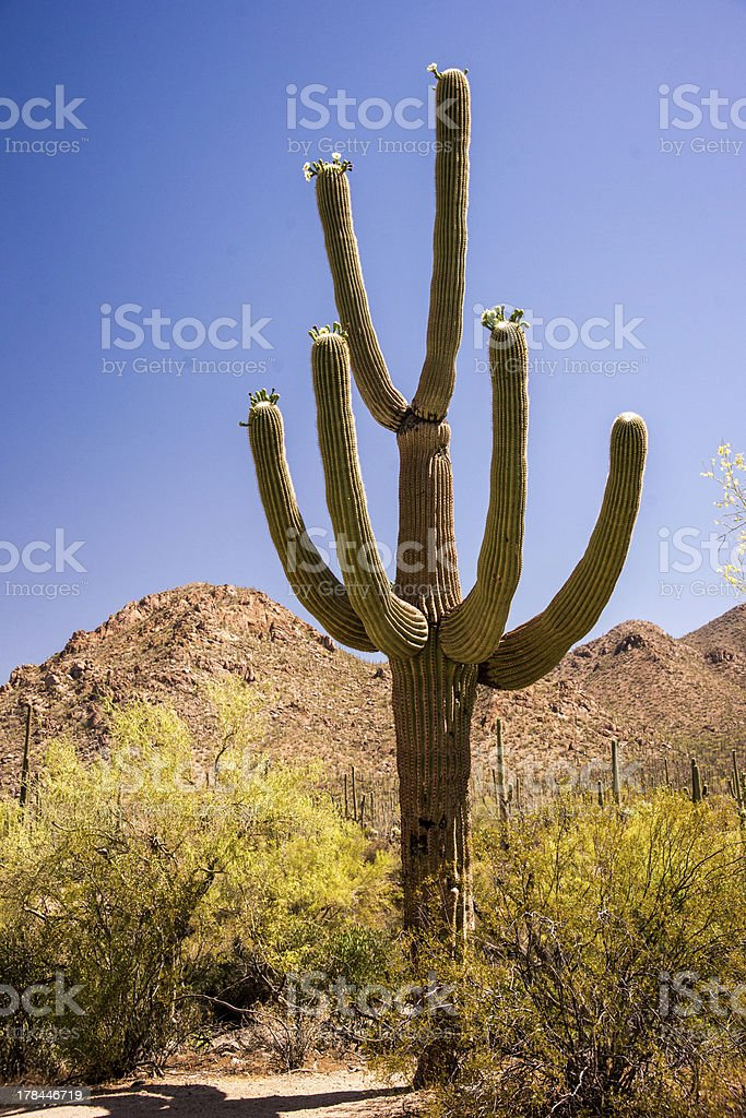 Symbol of the Old West royalty-free stock photo