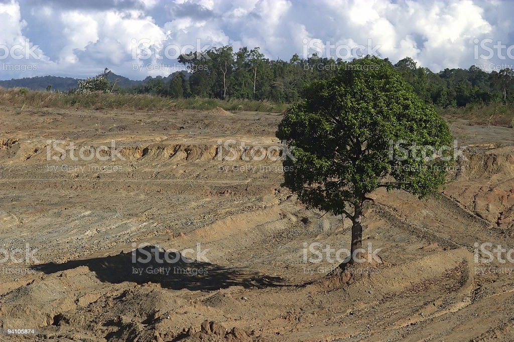 Symbolic Portrait of Rainforest Destruction royalty-free stock photo
