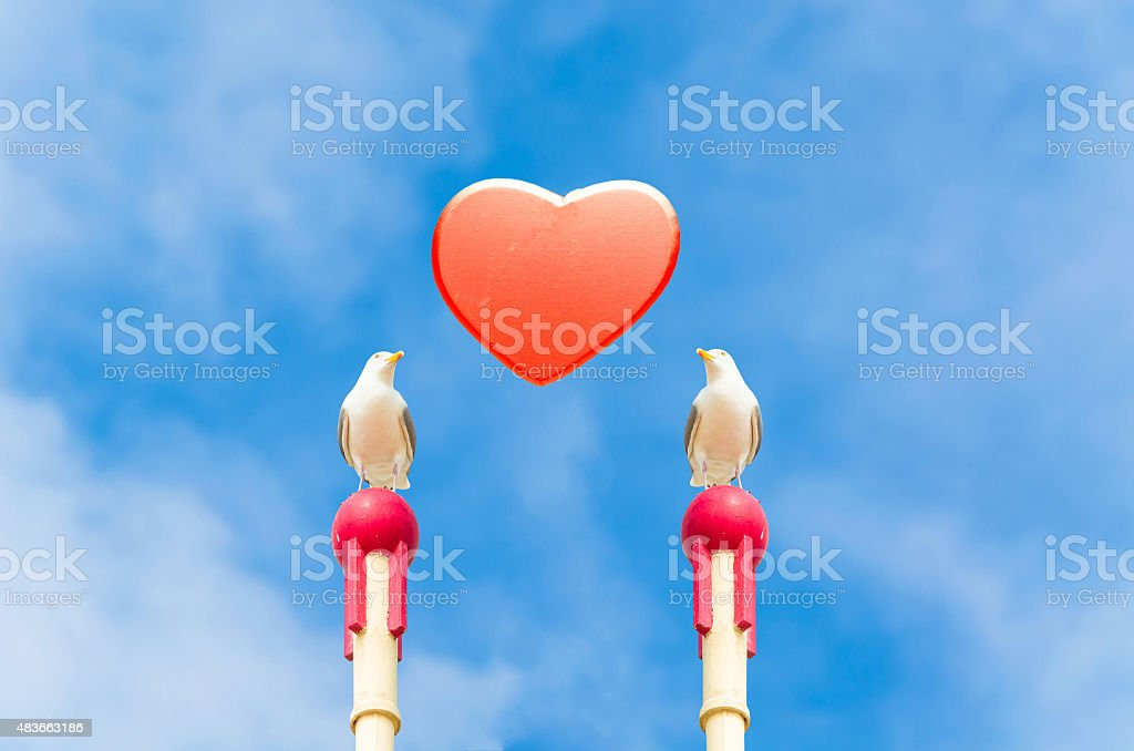 Symbolically, Seagull with red heart. stock photo
