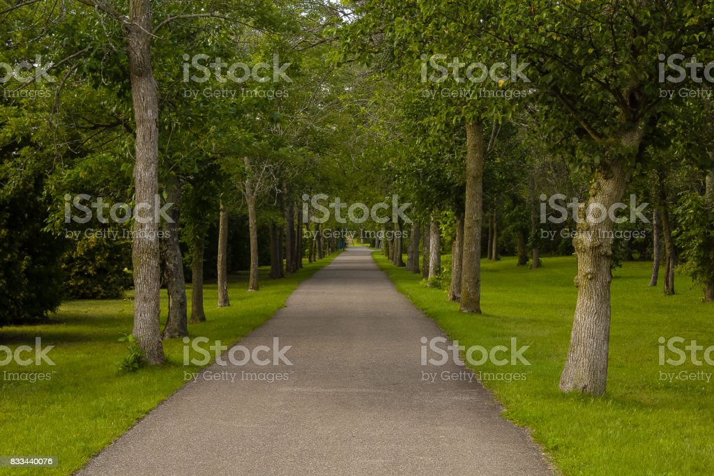 Symmetrical Forest Trail stock photo