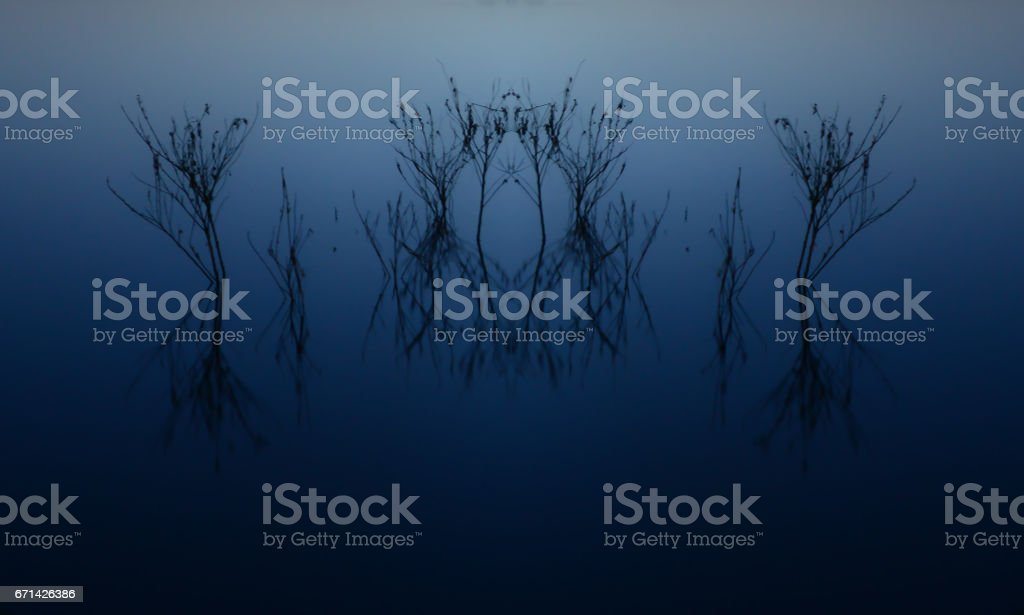 Symmetrical Treetops Rise from the Lake stock photo
