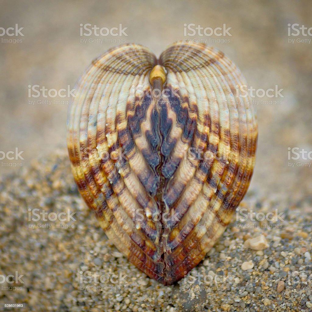 Symmetry of sea shell on the beach stock photo
