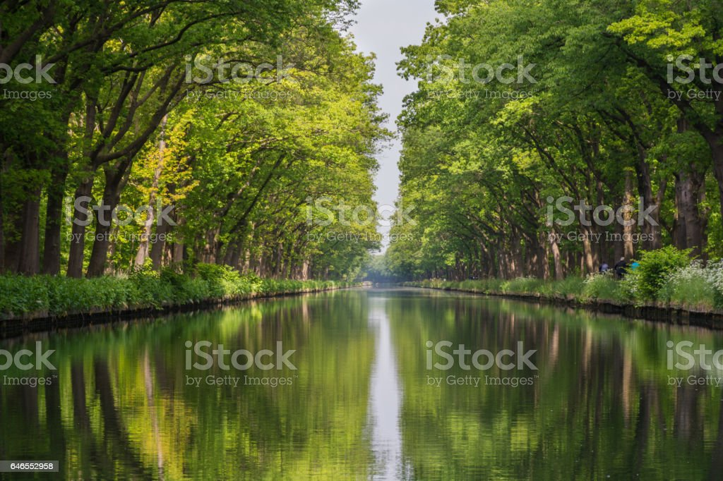 Symmetry view on flow line of menmade canal in Belgium with reflection. Soft Waterline flows through a beautiful summer forest with green trees. stock photo