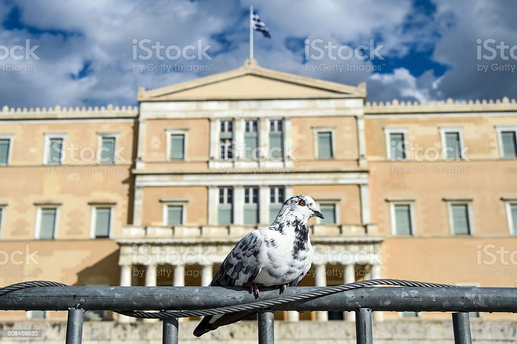 Syntagma's pidgeon stock photo