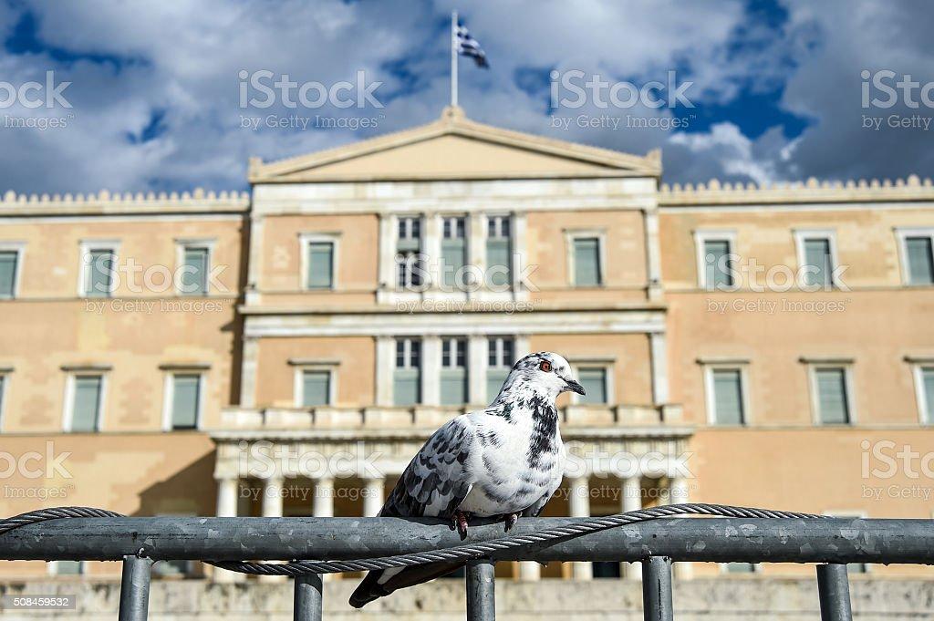 Syntagma's pidgeon stock photo
