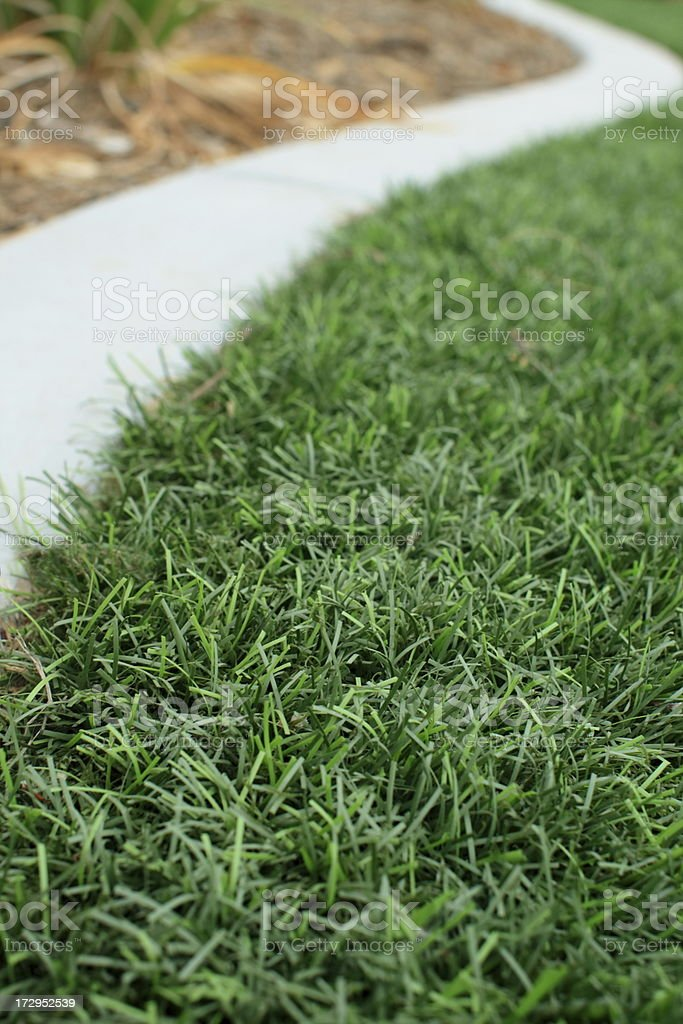Synthetic Lawn with Mow Curb stock photo
