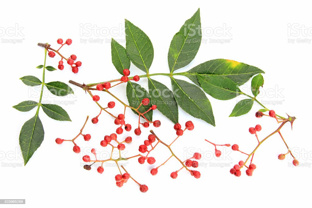 Szechuan pepper (Zanthoxylum piperitum) stock photo