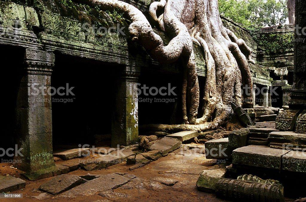 Ta Phrom, Angkor Wat, Cambodia royalty-free stock photo