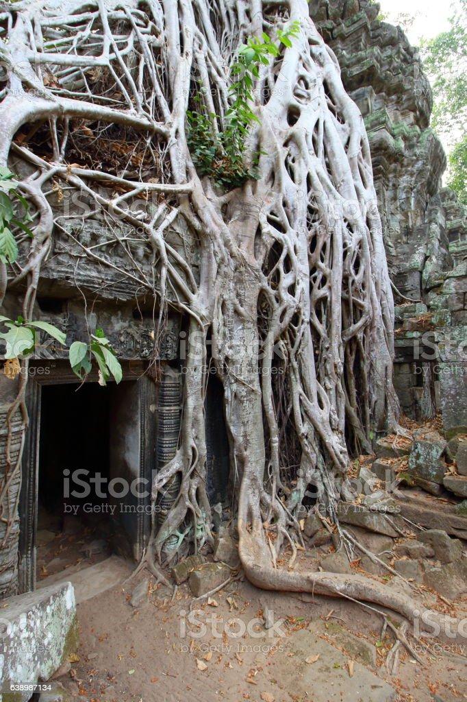 Ta Prohm, Angkor, Cambodia stock photo