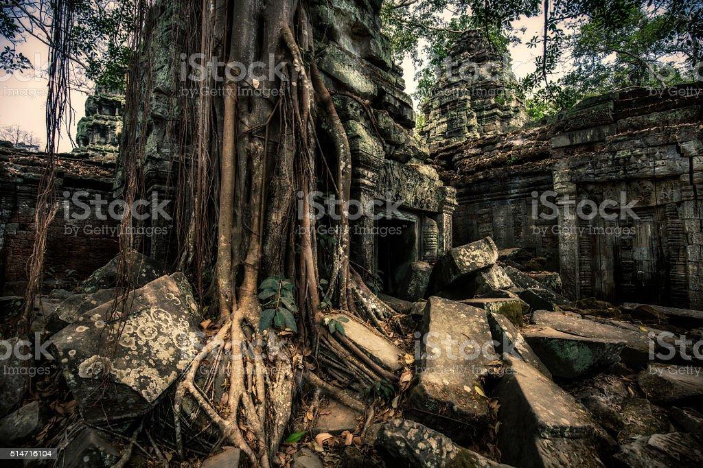 Ta Prohm Angkor ruins Cambodia stock photo