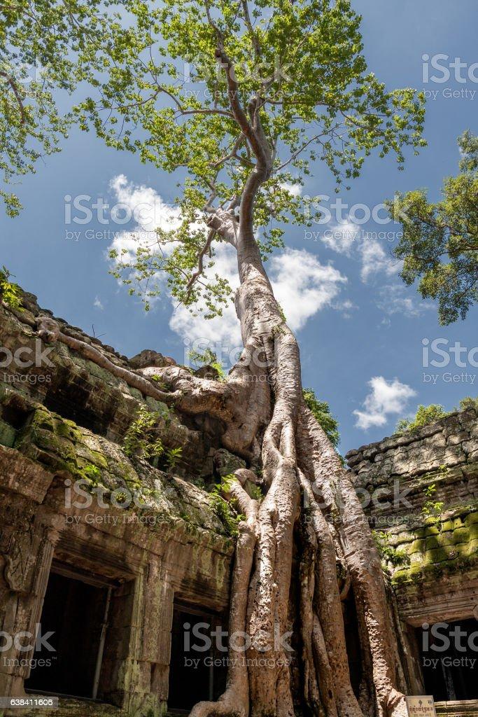Ta Prohm (Cambodia) stock photo