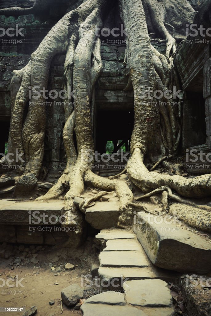 Ta Prohm Temple, Ancient Angkor, Cambodia stock photo