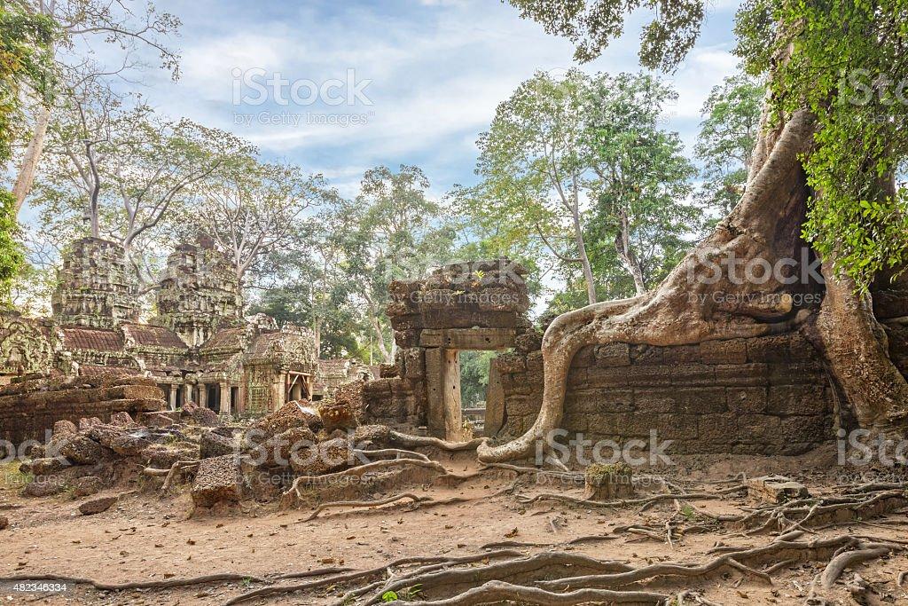 Ta Prohm Temple ancient tree roots, Angkor stock photo