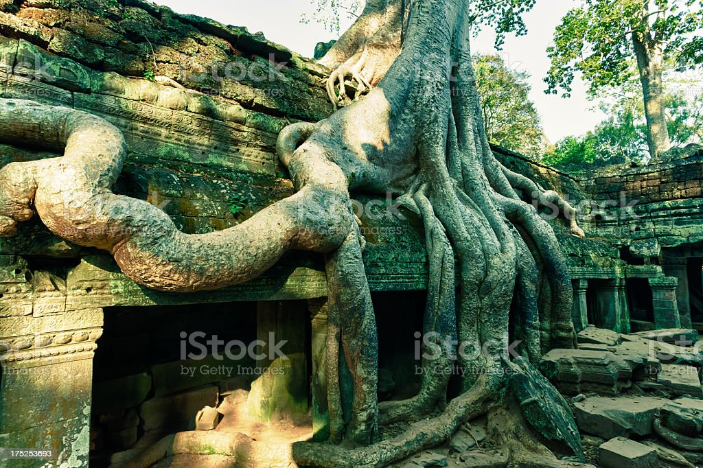 Ta Prohm temple, Angkor, Cambodia royalty-free stock photo