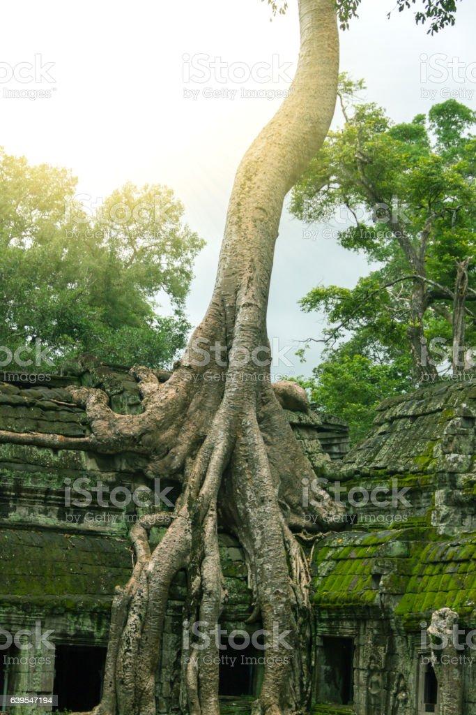 Ta Prohm Temple, Angkor, Cambodia stock photo