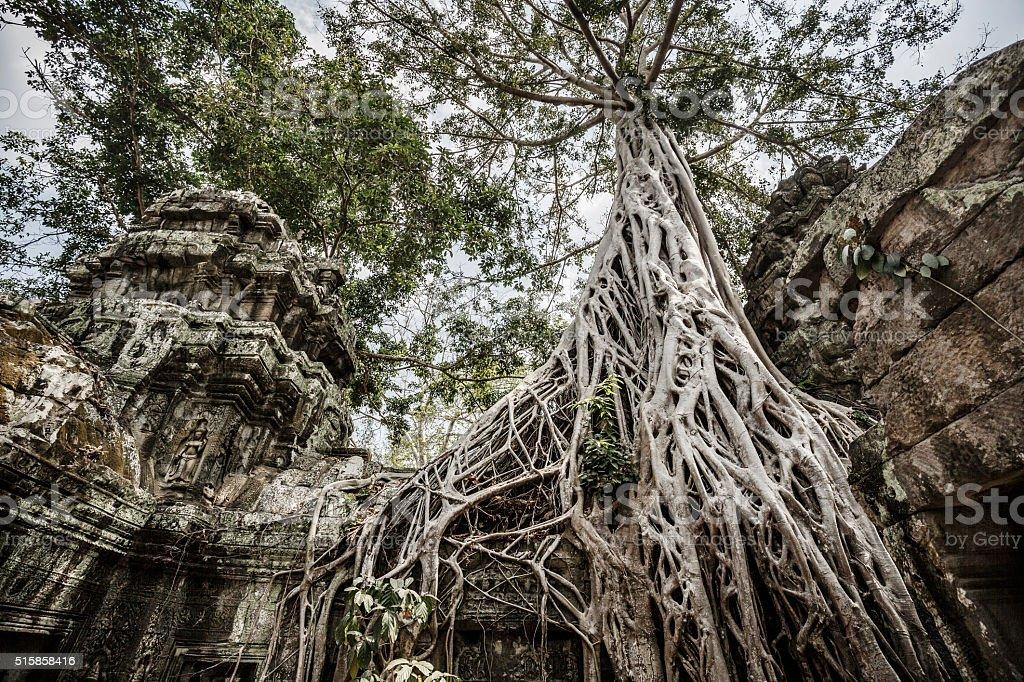 Ta Prohm temple complex Angkor ruins Cambodia stock photo