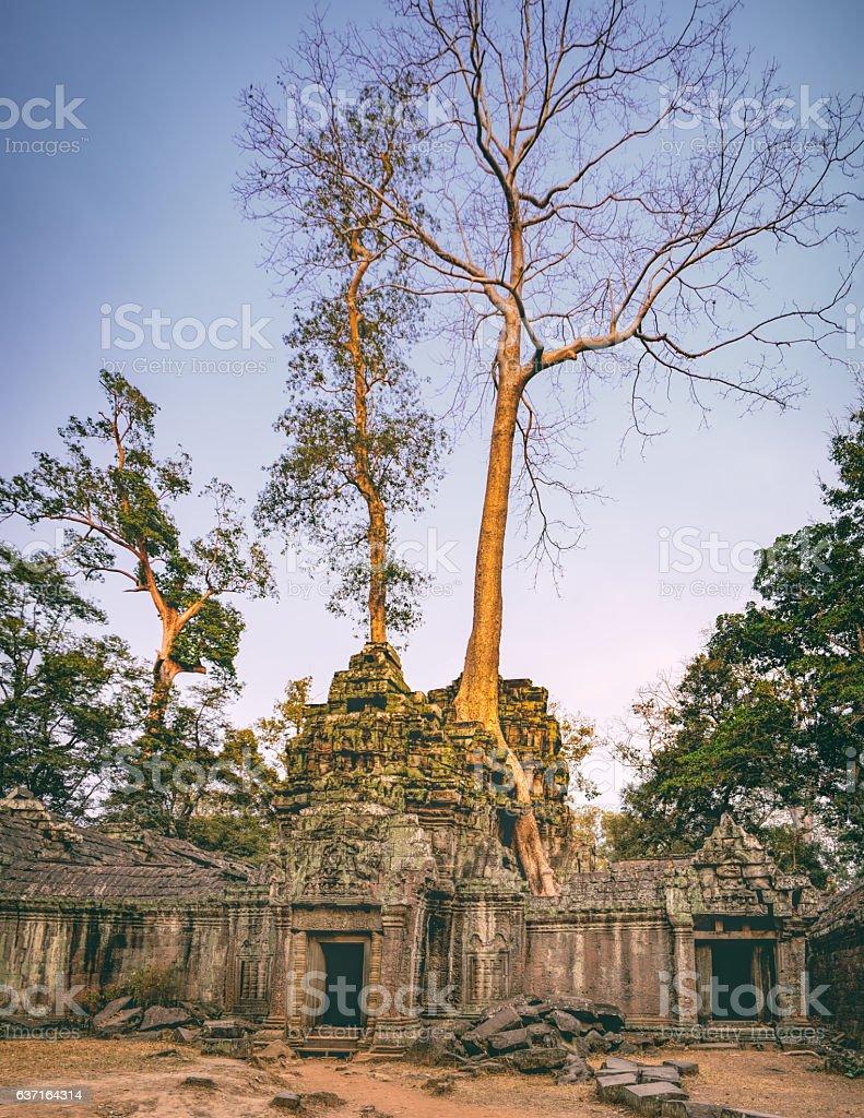 Ta Prohm Temple in Angkor Complex, Cambodia stock photo