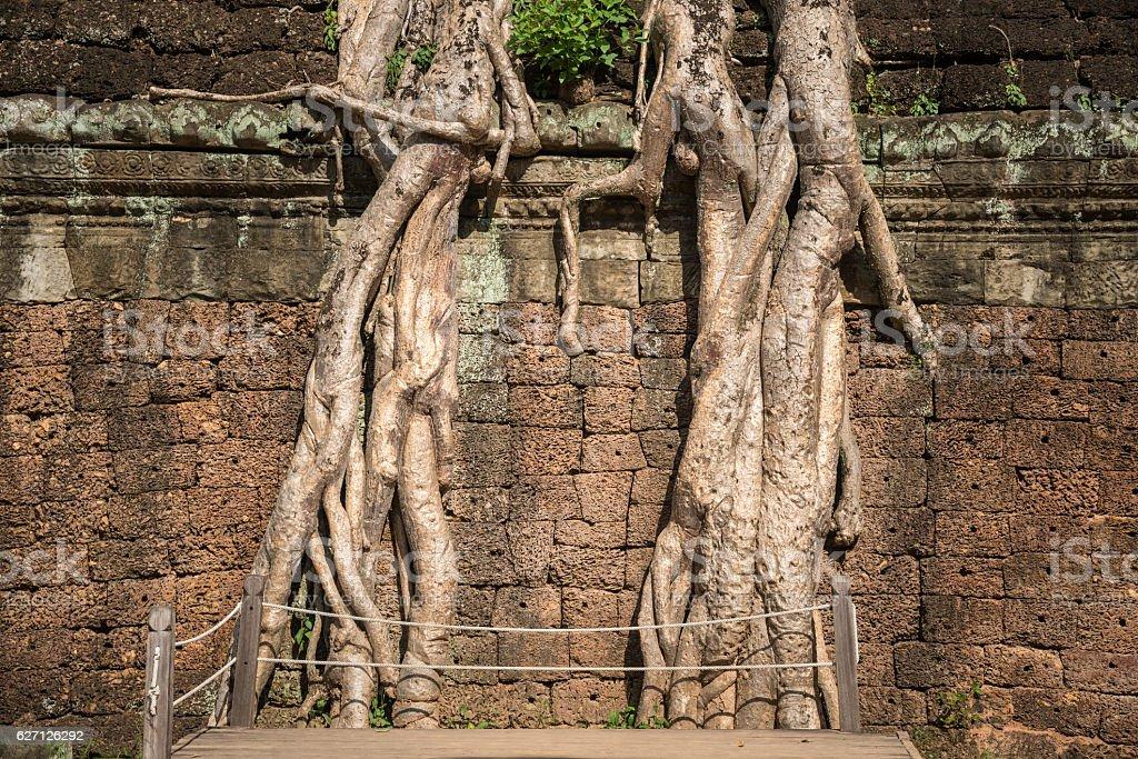 Ta Prohm temple in Siem Reap, Cambodia. stock photo