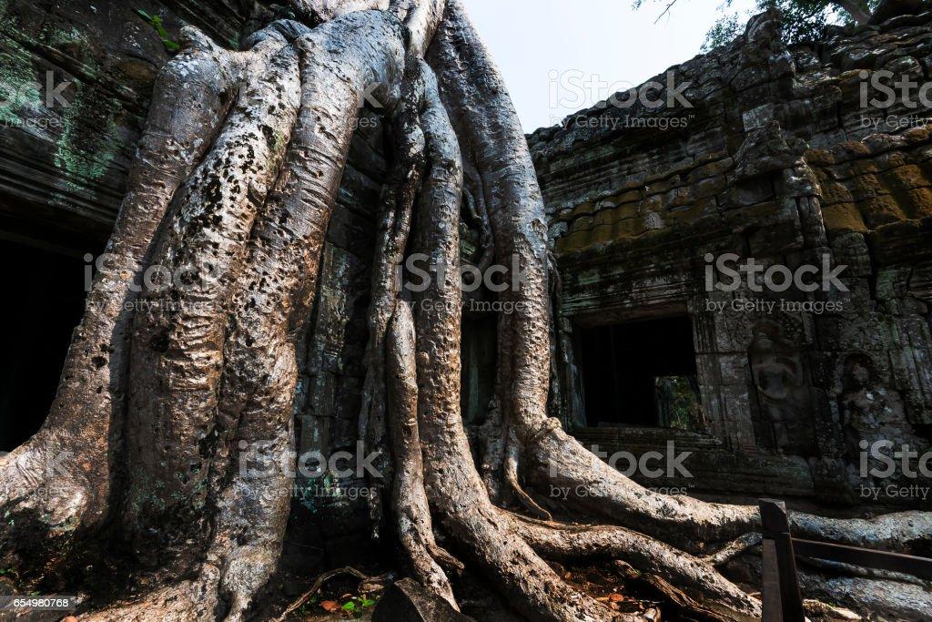 Ta Prohm Temple stock photo