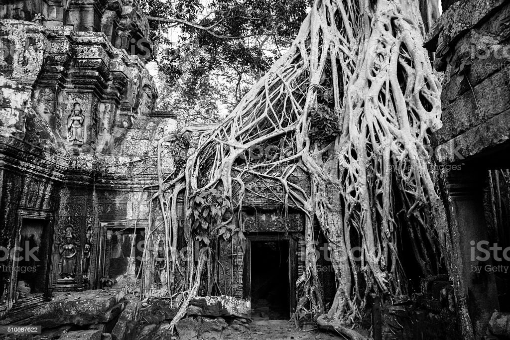 Ta Prohm Temple Siem Reap Angkor Wat Cambodia BW stock photo