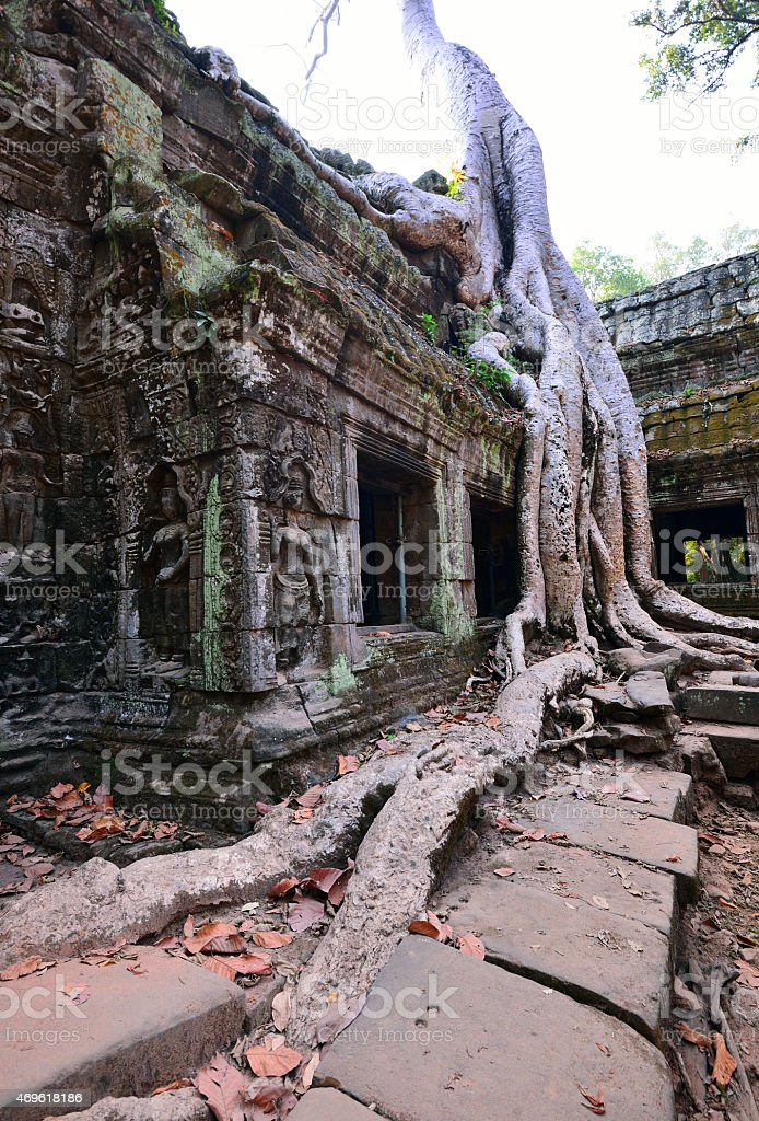 Ta Prohm temple with big tree and roots. stock photo