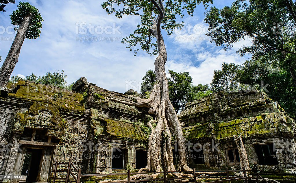 Ta Prohm Temple With Tree Growing Out stock photo