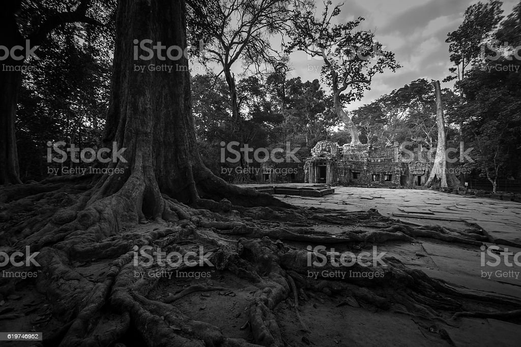 Ta Prohm with banyan tree root foreground Siem Reap Cambodia stock photo