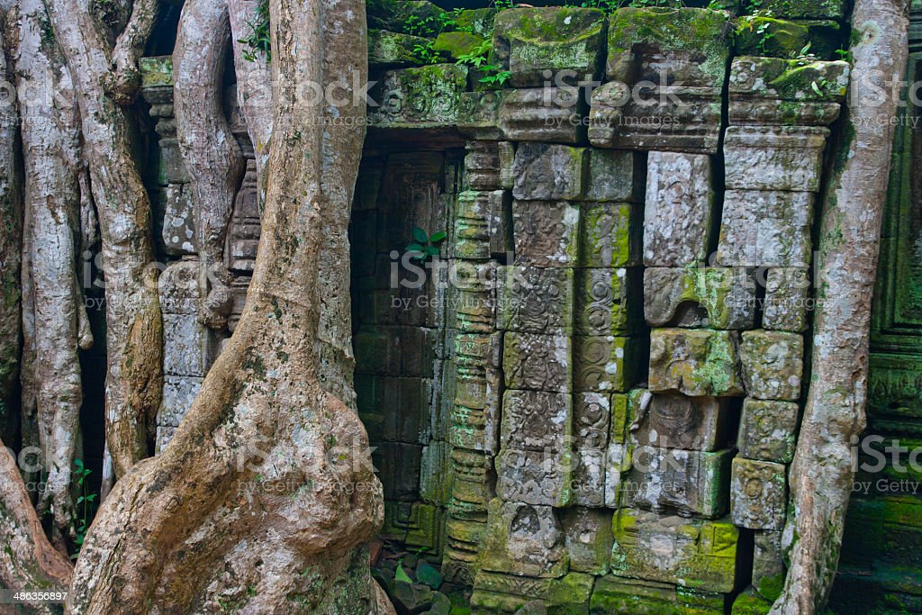 ta prohm,Cambodia stock photo