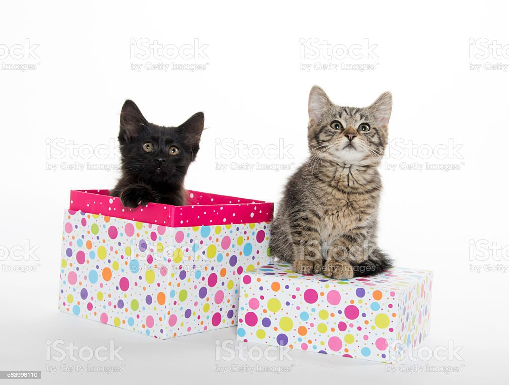 Tabby and black kitten stock photo
