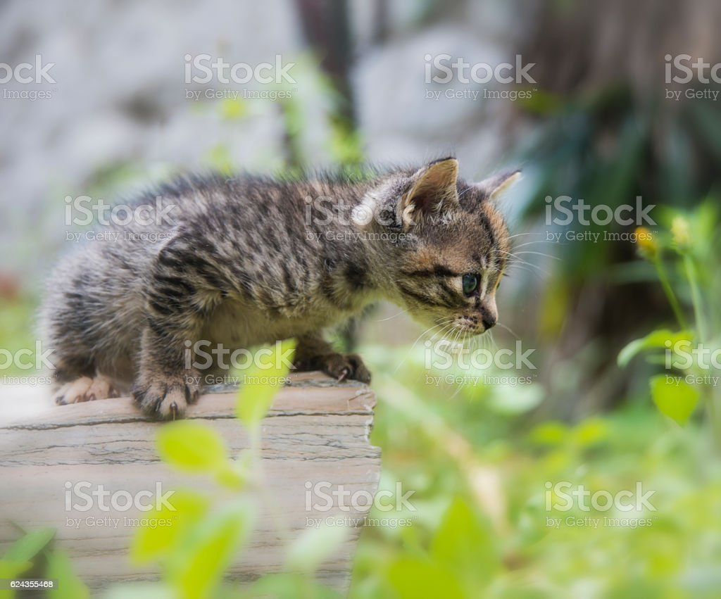 Tabby baby cat stock photo