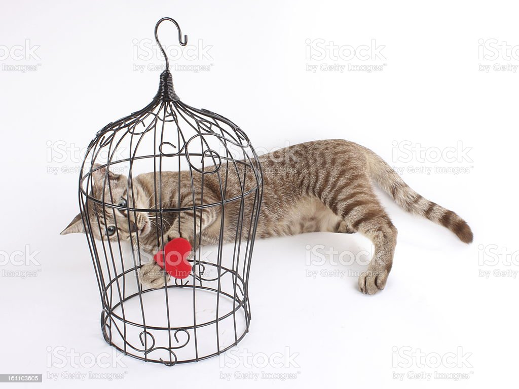 Tabby cat is trying to catch red heart royalty-free stock photo