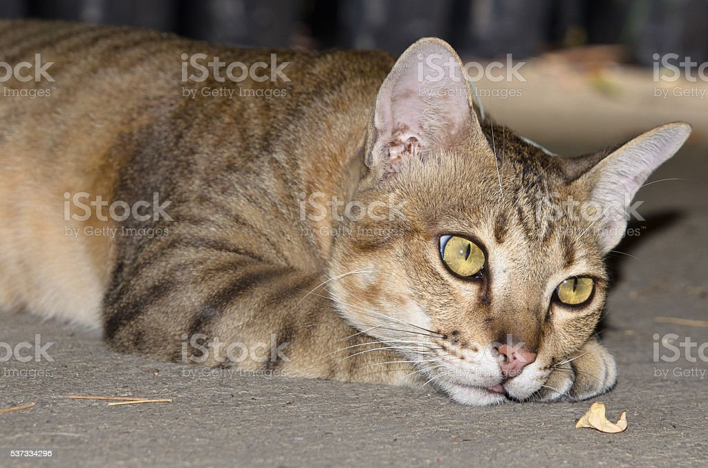 Tabby cat laying in concrete stock photo