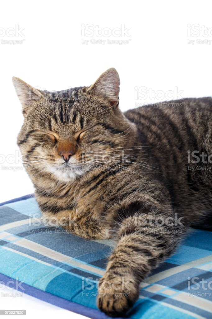 Tabby cat on white background. Vector illustration. stock photo