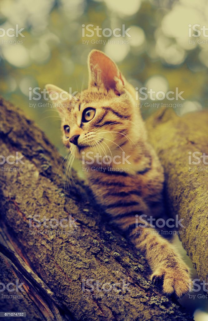 tabby cat sitting in tree stock photo